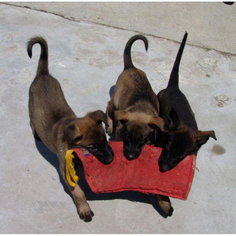 Euro-Joe-Bite-Sleeve-Nylcot-No1-Puppy