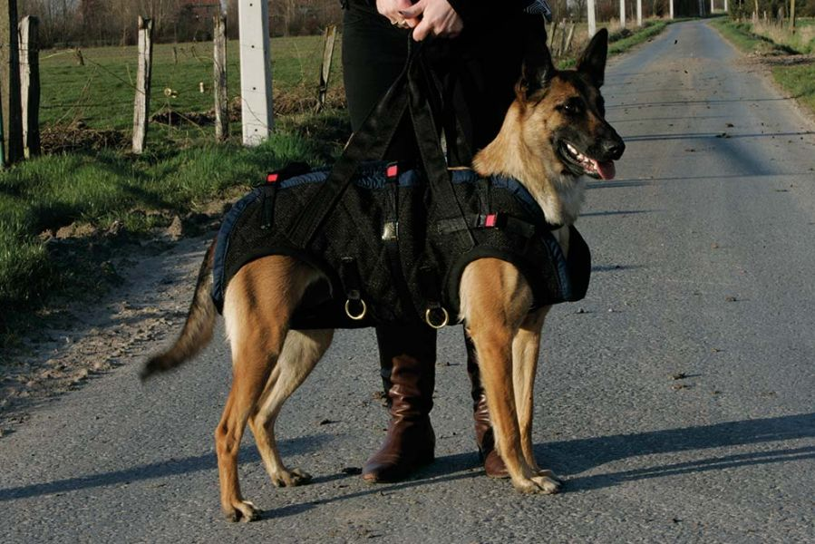 Rescue-Dog-Carry-Harness